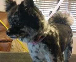 Photo #15: Dog Grooming Salon