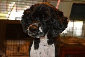 Photo #18: Dog Grooming Salon