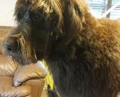 Photo #19: Dog Grooming Salon