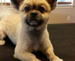 Photo #21: Dog Grooming Salon