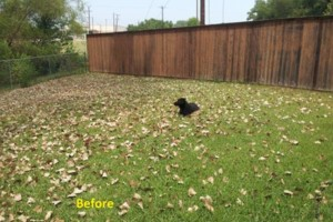 Photo #3: Leaf Cleanup and Landscaping in Mesquite