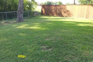 Photo #2: Leaf Cleanup and Landscaping in Mesquite