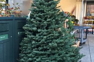 Photo #3: CHRISTMAS TREE DELIVERIES