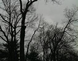 Photo #1: Discounted Winter Rates on Tree Service