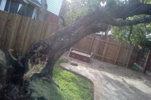 Photo #1: RAMIREZ TREE SERVICES -DEAD TREE REMOVAL, TRIMMING AND MORE!