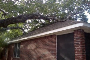 Photo #3: RAMIREZ TREE SERVICES -DEAD TREE REMOVAL, TRIMMING AND MORE!