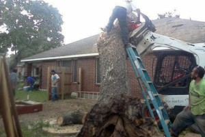 Photo #4: RAMIREZ TREE SERVICES -DEAD TREE REMOVAL, TRIMMING AND MORE!