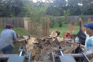 Photo #5: RAMIREZ TREE SERVICES -DEAD TREE REMOVAL, TRIMMING AND MORE!