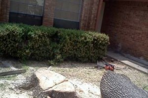 Photo #9: RAMIREZ TREE SERVICES -DEAD TREE REMOVAL, TRIMMING AND MORE!