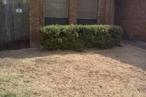 Photo #10: RAMIREZ TREE SERVICES -DEAD TREE REMOVAL, TRIMMING AND MORE!