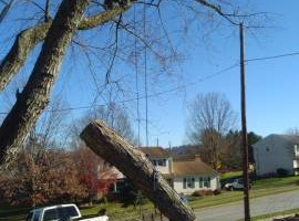 Photo #3: Old Fashioned Tree Service