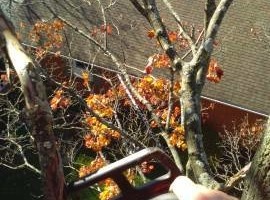 Photo #1: Old Fashioned Tree Service