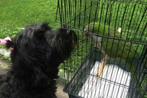 Photo #1: Family Style Pet Care dogs, birds, cats