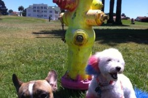 Photo #10: Dog Walker at Got Doggies? Your 1st Walk is Free!