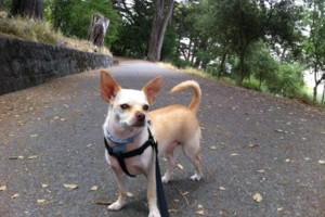 Photo #8: Dog Walker at Got Doggies? Your 1st Walk is Free!