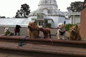 Photo #4: Dog Walker at Got Doggies? Your 1st Walk is Free!
