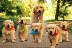 Photo #1: Experienced Pet Care Specialist and Dog Walker