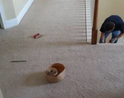 Photo #3: CARPET WORKS: removal, installation, repair