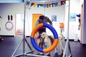 Photo #1: Zoom Room Dog Training