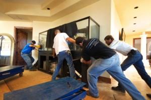Photo #1: Limited Edition Corals. Aquarium Maintenance Services