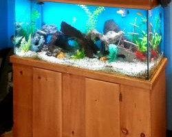 Photo #1: Fishguy Aquariums