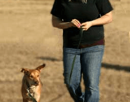 Photo #1: Dog House Training Academy