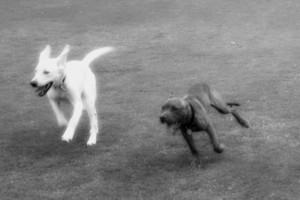 Photo #1: Arizona Custom Canine