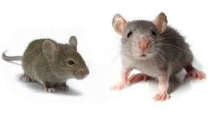 Photo #2: Philly Best Pest Control!