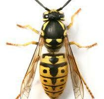 Photo #1: Philly Best Pest Control!