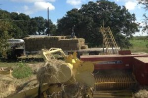 Photo #2: Hay rebaling