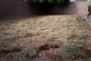 Photo #9: YARD SERVICE - clean up, cactus removal, planting, weeds removal