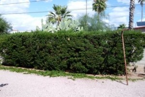 Photo #7: YARD SERVICE - clean up, cactus removal, planting, weeds removal