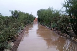 Photo #4: YARD SERVICE - clean up, cactus removal, planting, weeds removal
