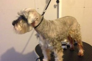 Photo #3: GROOMING all breeds... Half off new clients!!!