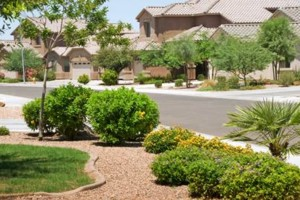 Photo #1: YARD LAWN AND TREE CARE - Weed control and spray...