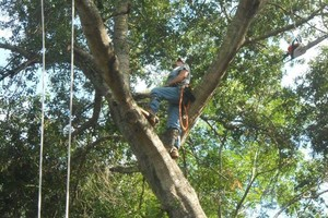Photo #6: TREE SERVICE. HOME REPAIRS. ALL IN ONE HANDY MAN!