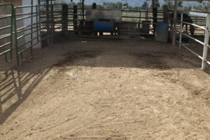 Photo #1: M & M Stables. Horse Boarding and Obstacle Course