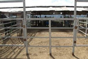 Photo #2: M & M Stables. Horse Boarding and Obstacle Course