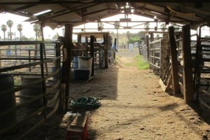 Photo #6: M & M Stables. Horse Boarding and Obstacle Course