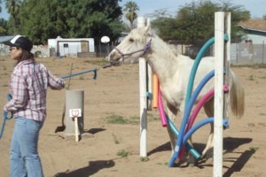 Photo #11: M & M Stables. Horse Boarding and Obstacle Course