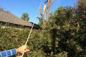 Photo #2: Tree services! Nice and quick service!