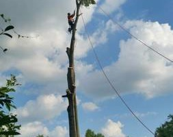 Photo #9: CHANES TREE SERVICES -FREE ESTIMATES!