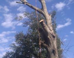 Photo #8: CHANES TREE SERVICES -FREE ESTIMATES!