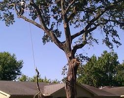 Photo #7: CHANES TREE SERVICES -FREE ESTIMATES!