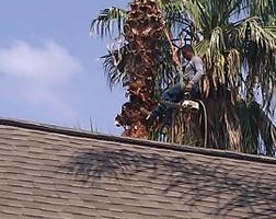 Photo #4: CHANES TREE SERVICES -FREE ESTIMATES!