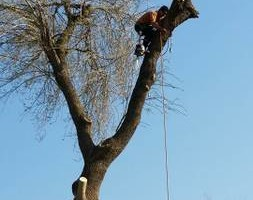 Photo #2: CHANES TREE SERVICES -FREE ESTIMATES!