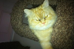 Photo #6: Aunt Kitty's Pet Sitting Would Love To Care For Your Pets