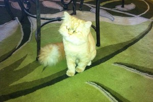Photo #3: Aunt Kitty's Pet Sitting Would Love To Care For Your Pets