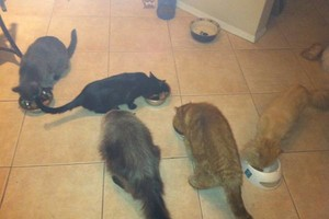 Photo #1: Aunt Kitty's Pet Sitting Would Love To Care For Your Pets