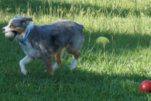 Photo #6: Pet Sitter ~ Your Dog Will Be Part of Our Family!